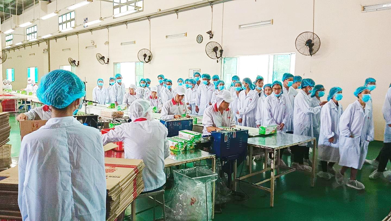 Sinh viên đi thực tế tại Công ty cổ phần bánh kẹo Biên Hòa BIBICA