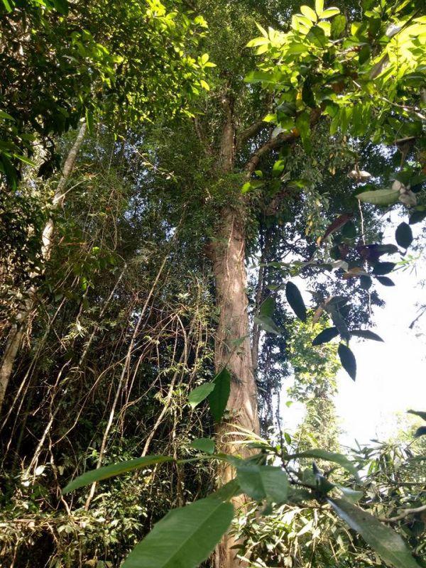 Cùng tìm hiểu các loại thực vật phong phú trong rừng